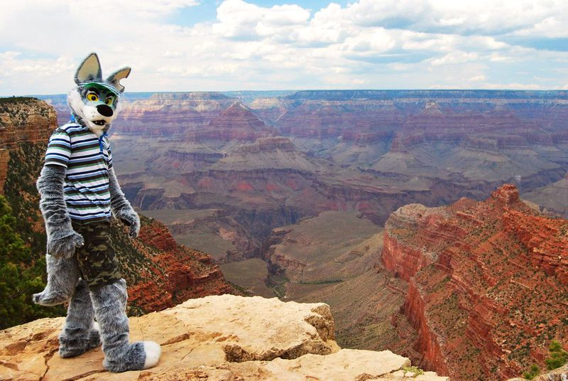 File:Yotie Coyote at the Grand Canyon.jpg